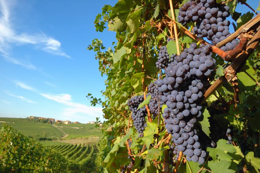 Wine tours, winery, wine tasting