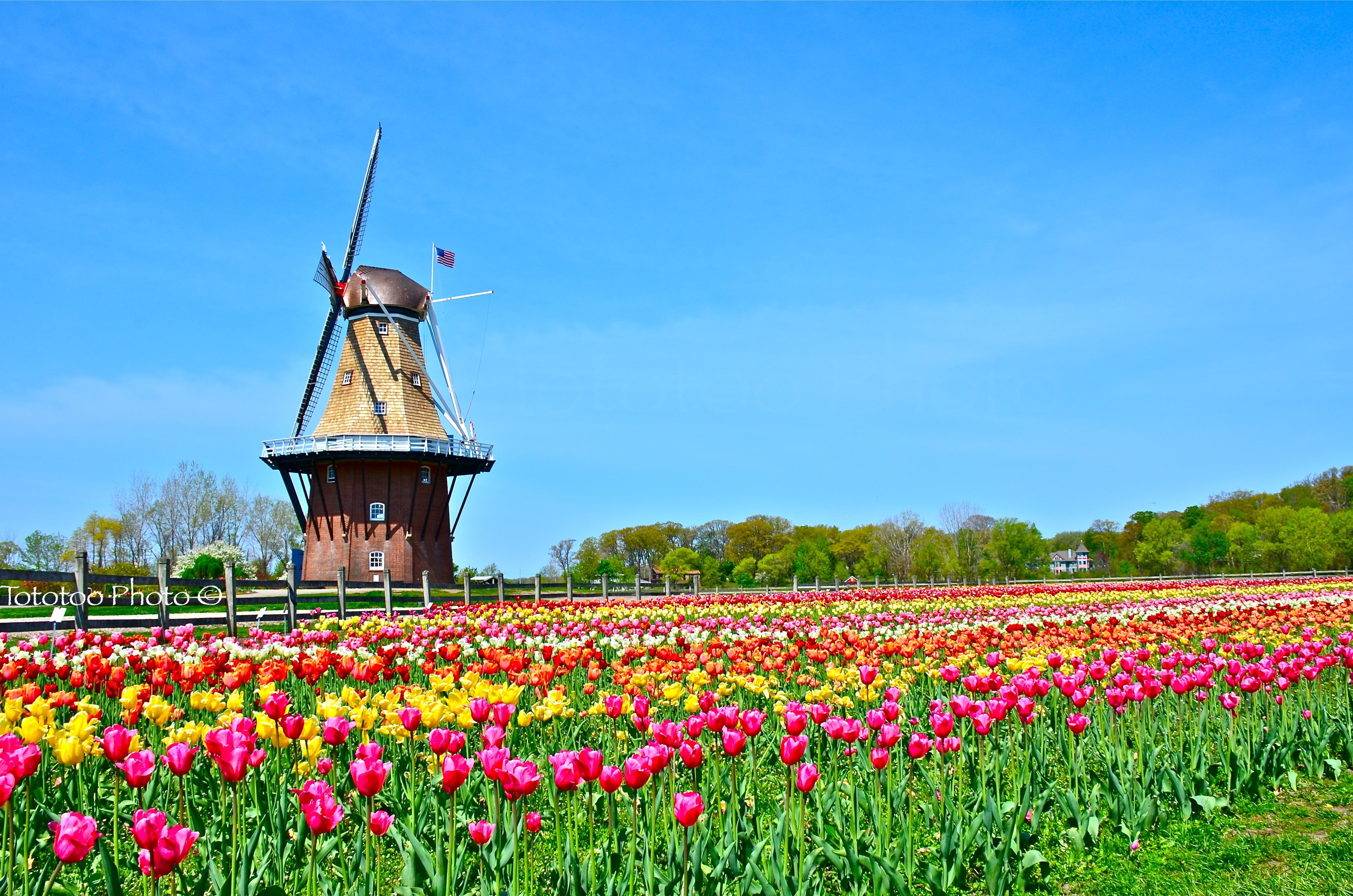Holland_Windmill