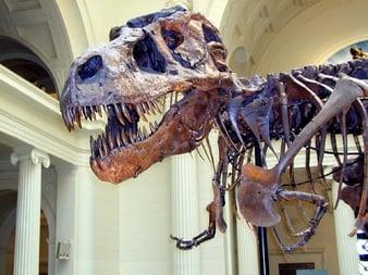 sue-the-t-rex-chicago-field-museum-bus-trip