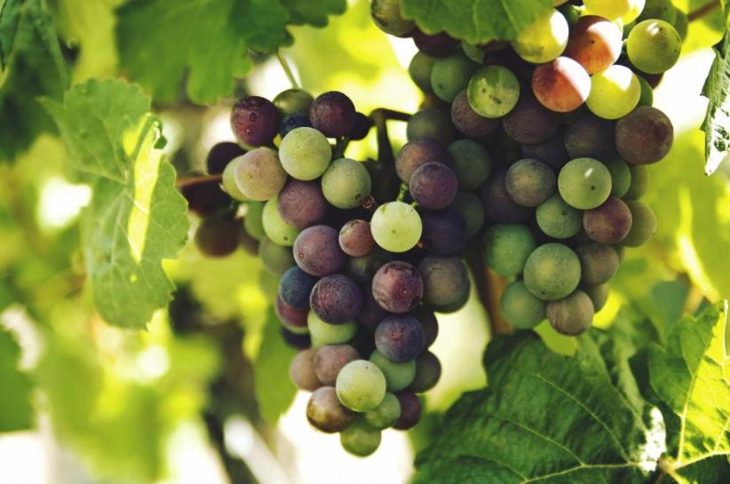Group Trip Ideas: Explore Michigan's Wineries